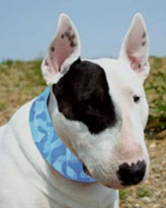 Koiran Viilentävä panta | Kissan Viilentävä panta | Cool Blue | Koiratarvikkeet | Kissatarvikkeet | Lemmikkitarvikkeet | Ilmainen Toimitus!