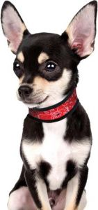 Dog Cooling Collar | Aqua Cool Keeper | Red Western | DiivaDog.com