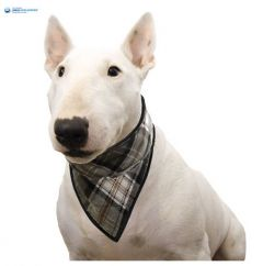 Dog Cooling Bandana | Aqua Cool Keeper | Scottish Grey | DiivaDog.com